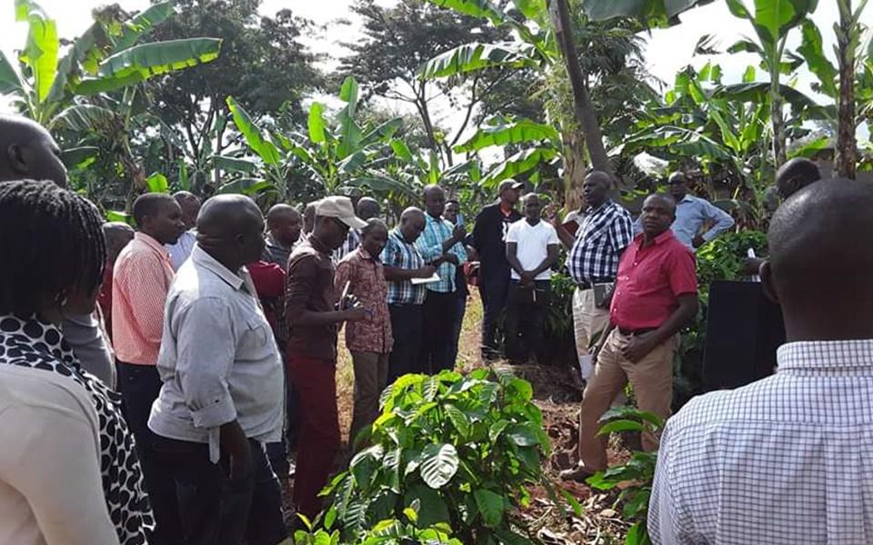 Producers of Arabica and Robusta Coffee., Uganda Coffee, Drink Uganda Coffee, Drink Uganda Coffee Authority