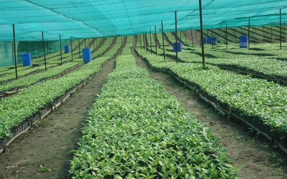 Producers of Arabica and Robusta Coffee. Drink Uganda Coffee Authority