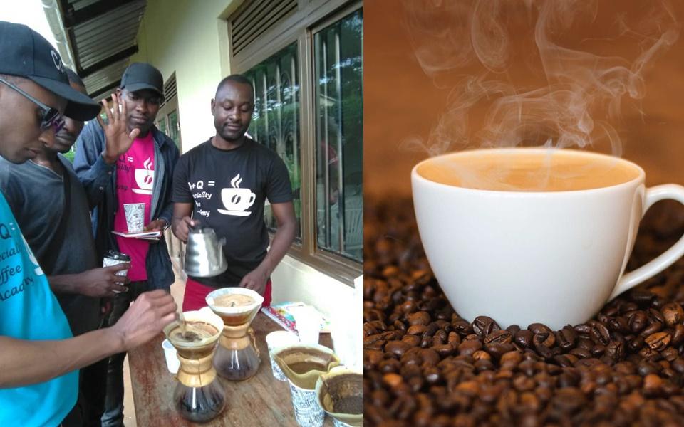 Uganda Arabica coffee, Uganda coffee beans, uganda coffee